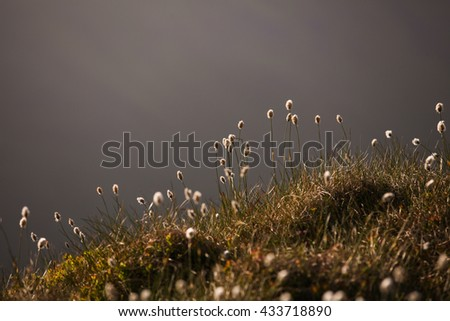 Fluffy plants on mountain - stock photo