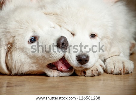 fluffy puppies - stock photo