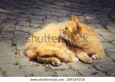 Fluffy red cat in the street. - stock photo