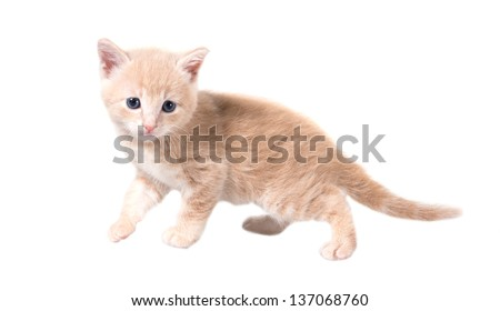 Fluffy red kitten isolated on white background - stock photo