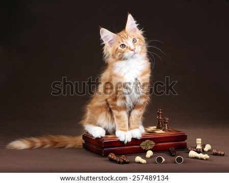 Fluffy red kitten with chess - stock photo