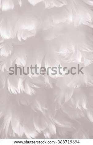 Fluffy snowy white bird feather animal texture background - shallow depth of field and soft focus - portrait layout - stock photo