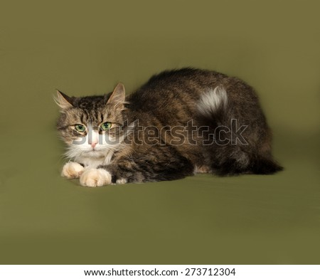 Fluffy tabby and white cat lying on green background - stock photo