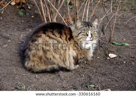 fluffy tabby cat outside - stock photo