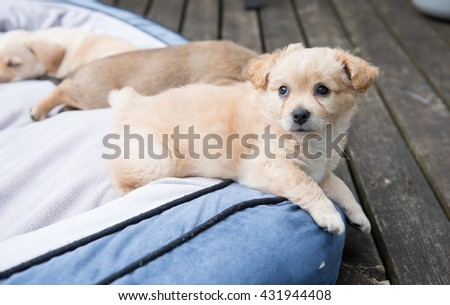 Fluffy Terrier Mix Puppy Relaxing on Dog Bed Outside