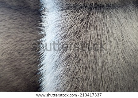 fluffy texture of fur of wild animals with a strip for abstract backgrounds