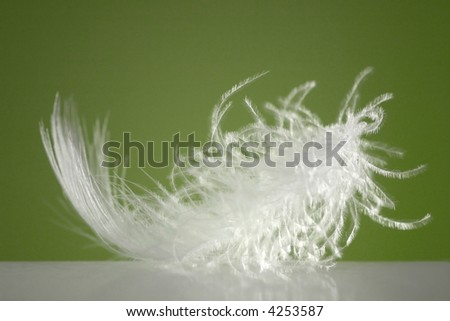 Fluffy white feather with green background and spotlight