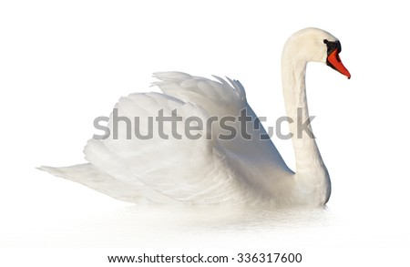 Fluffy white swan with fake wave, isolated on white surface.