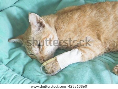fluid therapy in cat - stock photo