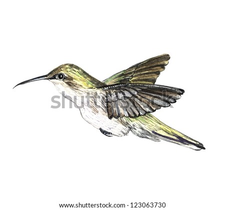 fluttering hummingbird watercolor