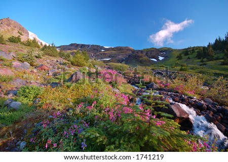 flwoery meadow and stream high in the mountains - stock photo