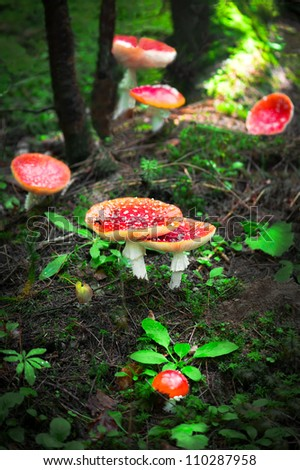 Fly agaric mushrooms in forest. Shallow depth of field - stock photo