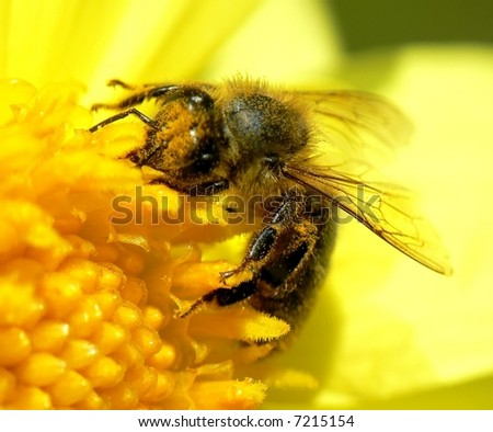 fly, bee, insect,  flower, spring, summer, pollen, pollinate, garden, meadow, field, hairy, feelers, yellow, sun, eyes, wing