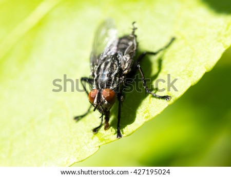 fly close up on a green leaf