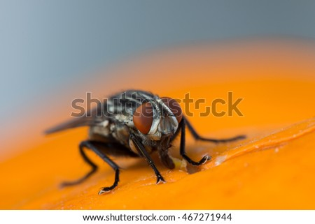 fly close-up on orange background