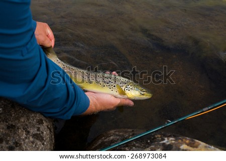 Fly fisherman holding a Brown Trout fish prior to release - stock photo