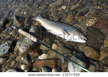 Fly fishing - Brown Trout on the River of New Zealand