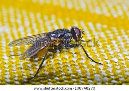 Fly home - the worm (Musca domestica) - stock photo