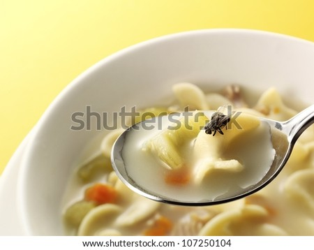 fly in soup - stock photo
