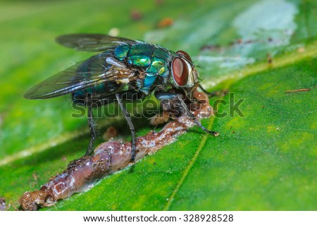 Fly,Insect, beetle, bug,macro insects, animals, nature. - stock photo