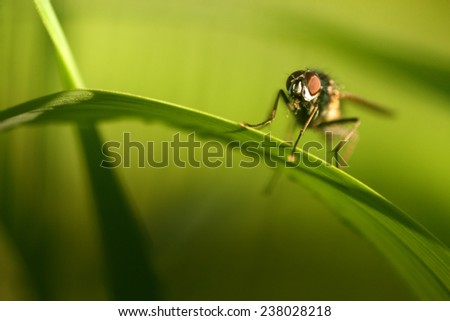 fly on a blade - stock photo