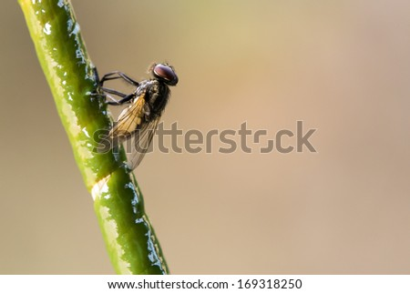 fly on the trap. - stock photo