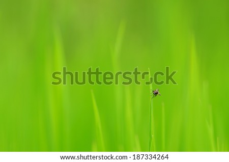 Fly resting on green grass