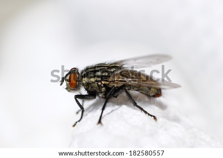 fly resting on the white towel