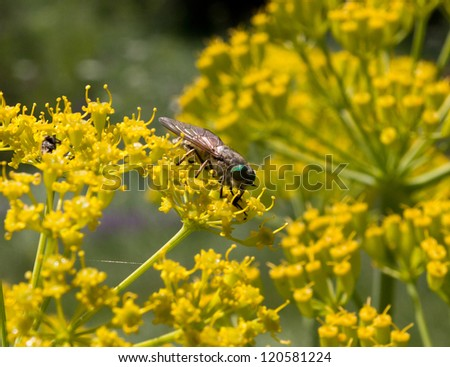 Fly to the yellow color - stock photo