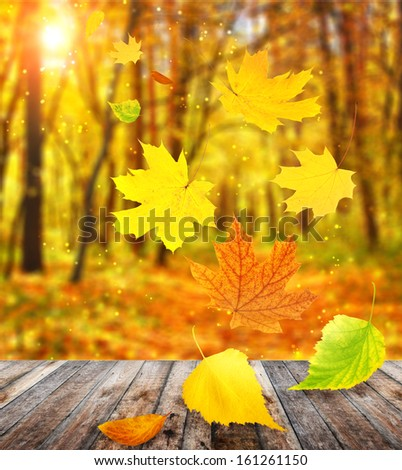 Flying autumn leaves of a birch, maple and barberry - stock photo