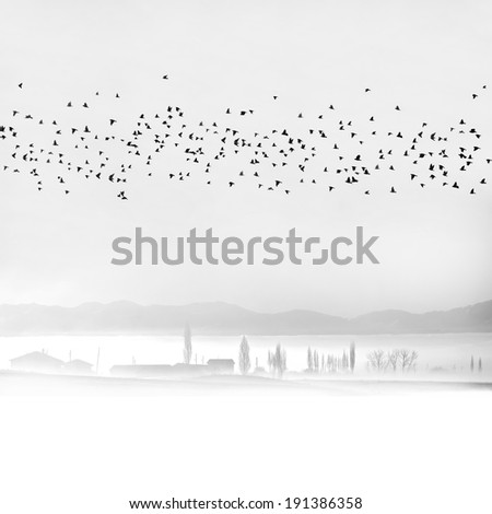 Flying bevy on the city fog. - stock photo