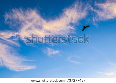 Flying Bird with beautiful clouds and sky in the morning. Motion blur bird.
