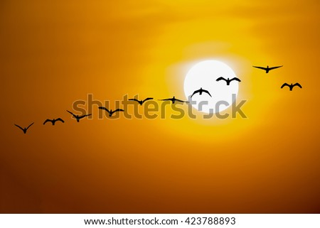 Flying Birds on the twilight