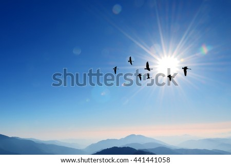 Flying birds over background landscape with solar sky  - stock photo