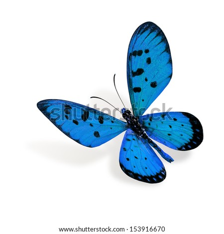 Flying Blue Butterfly - stock photo