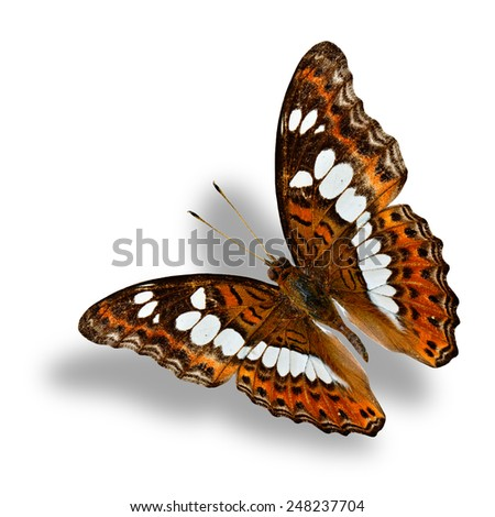 Flying Common Commander butterfly, the beautiful brown butterfly on white background with soft shadow beneath - stock photo