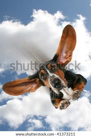 flying dog - stock photo