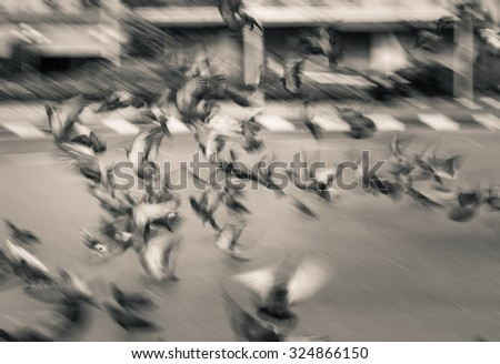flying dove group blur motion - stock photo