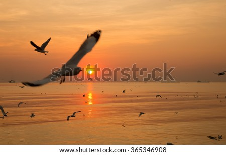 Flying Duo birds sunset