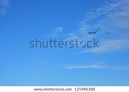 flying eagle on the blue sky - stock photo