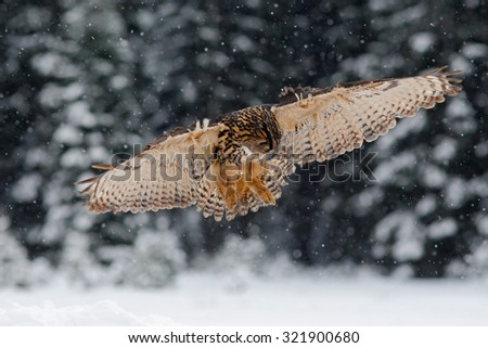 Flying Eurasian Eagle owl with open wings with snow flake in snowy forest during cold winter - stock photo
