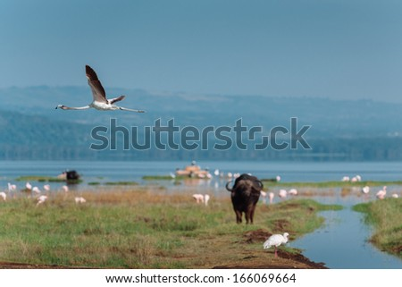flying flamingo - stock photo