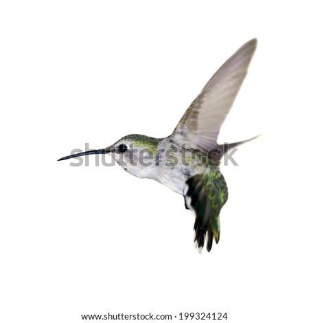 Flying hummingbird isolated on white. - stock photo