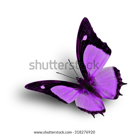 Flying Indian Nawab butterfly in fancy purple color profile on white background with soft shadow beneath - stock photo