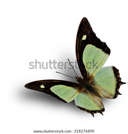 Flying Indian Nawab butterfly on white background with soft shadow beneath - stock photo