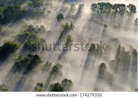 Flying over the trees - stock photo