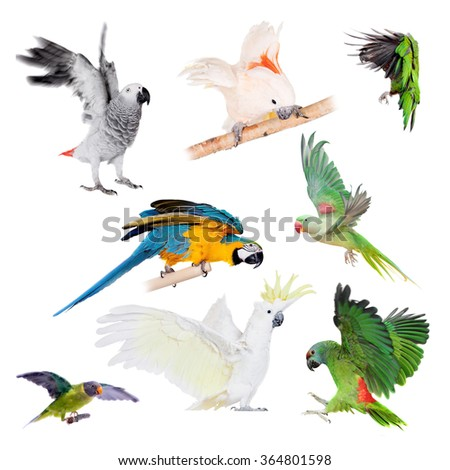 Flying Parrots set isolated on the white background - stock photo