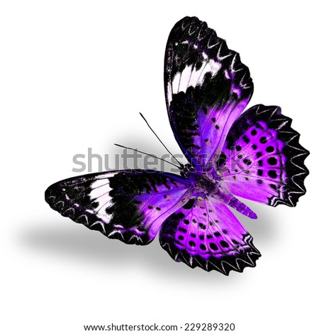 Flying Purple Butterfly (Leopard Lacewing) on white background with soft shadow - stock photo