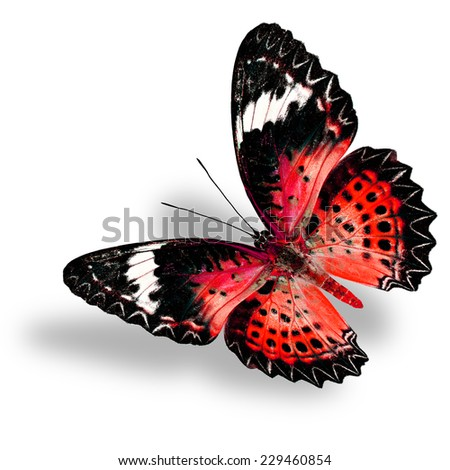 Flying Red Butterfly (Leopard Lacewing) on white background with soft shadow - stock photo