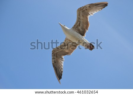 Flying sea gull at a beach.